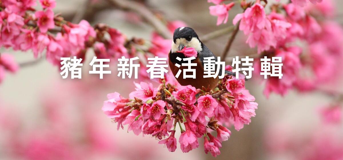 豬年新春活動特輯