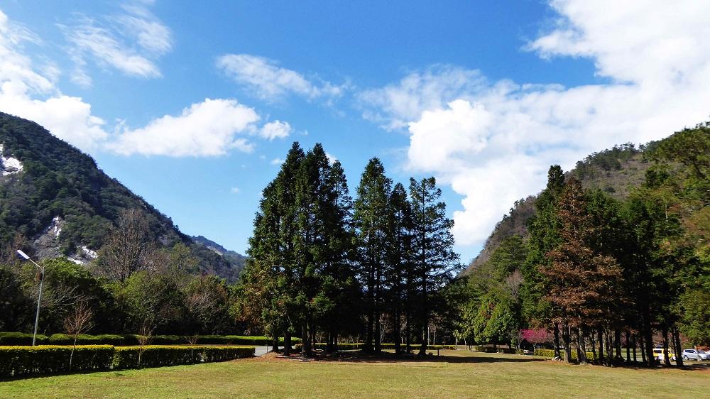 奧萬大-台灣杉